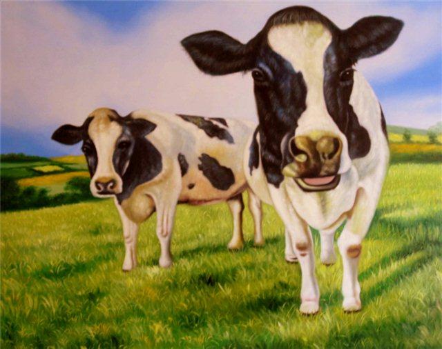 Twee koeien op 't land