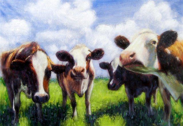 Vier nieuwsgierige koeien