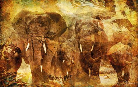 "Aluminium schilderij ""Bas – Elephants 2"" van Mondiart"