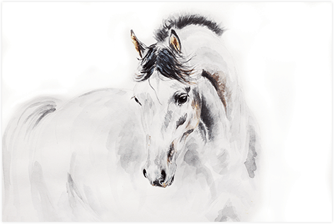 "Aluminium schilderij ""Arabic stallion"" van Mondiart"