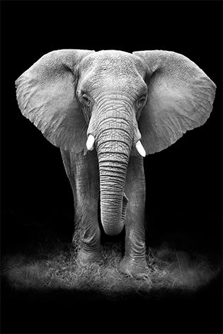 "Aluminium schilderij ""Elephant"" van Mondiart"