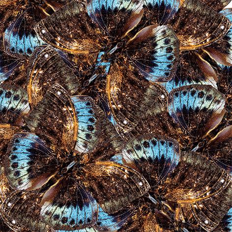 "Aluminium schilderij ""A group of brown butterflies"" van Mondiart"
