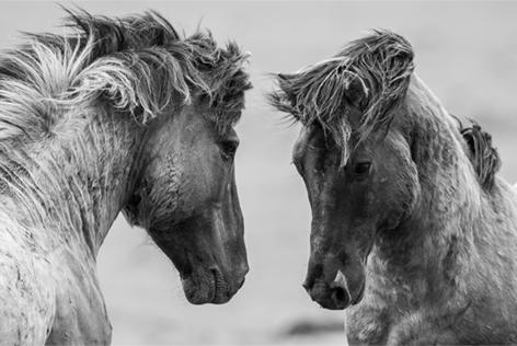 """Aluminium schilderij """"Work horses"""" van Mondiart"""