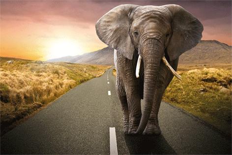 "Aluminium schilderij ""Elephant on the street"" van Mondiart"