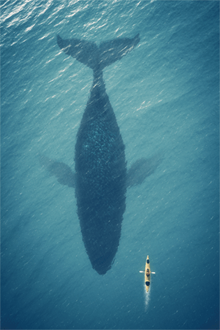 "Aluminium schilderij ""Big whale in the sea"" van Mondiart"