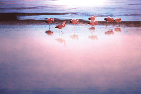 "Aluminium schilderij ""Pink flamingo's"" van Mondiart"