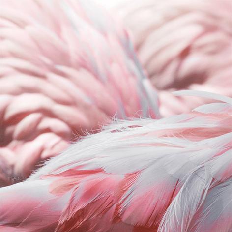 "Aluminium schilderij ""Flamingo features"" van Mondiart"