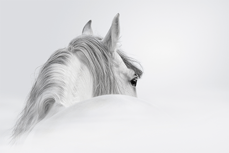 "Aluminium schilderij ""White horse"" van Mondiart"
