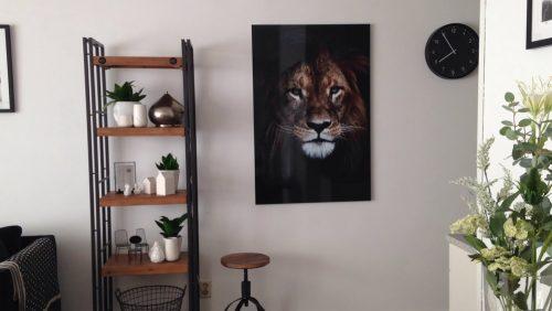 Mijn leeuw