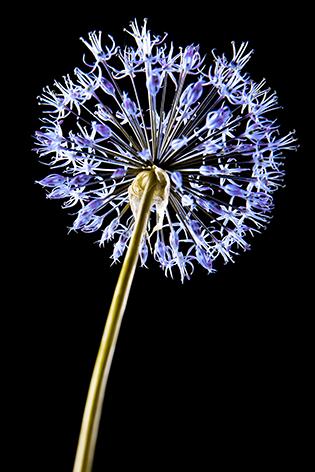 A beautiful purple flower
