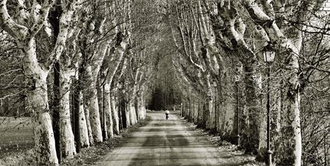 "Aluminium schilderij ""Summer trees"" van Mondiart"