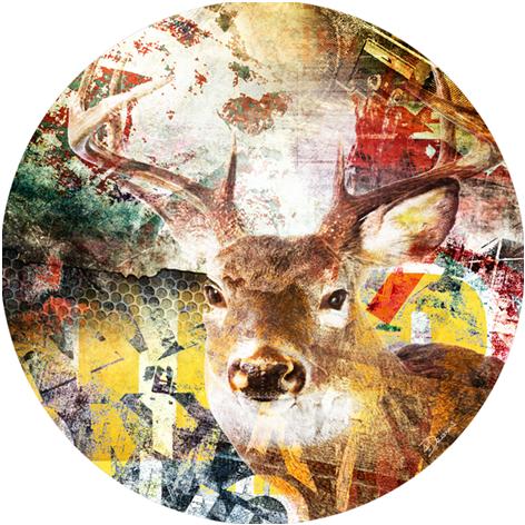 Bas – Deer