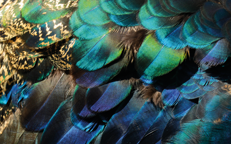 "Aluminium schilderij ""Colorful peacock feathers"" van Mondiart"