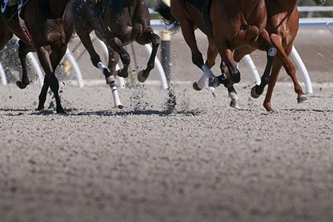 "Aluminium schilderij ""Speeding race horses"" van Mondiart"