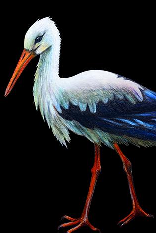 "Aluminium schilderij ""A small stork"" van Mondiart"