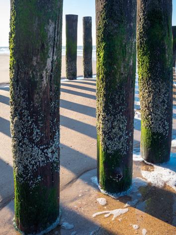 Wooden breakwater poles