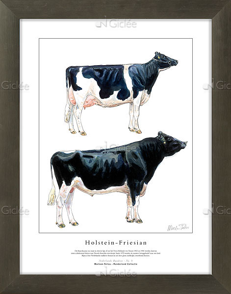 """Giclée/reproductie """"Holstein-Friesian"""" met certificaat"""