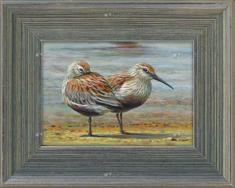 Bonte strandlopers