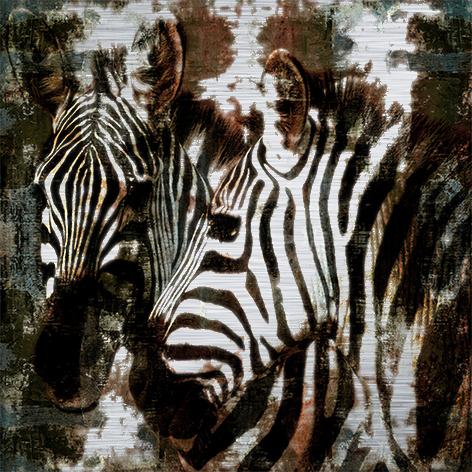 """Aluminium schilderij """"A zebra couple"""" van Mondiart"""