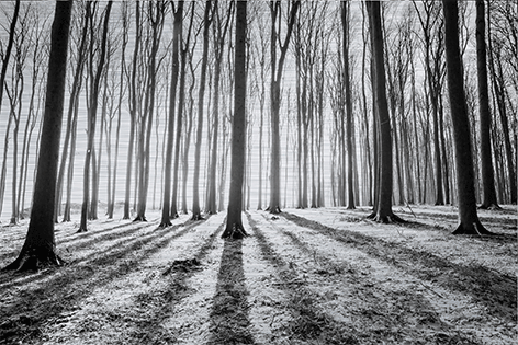 Forest in winter Bos Bomen Zonlicht Zwart wit