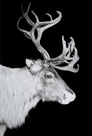 """Aluminium schilderij """"Reindeer with big sprouts"""" van Mondiart"""