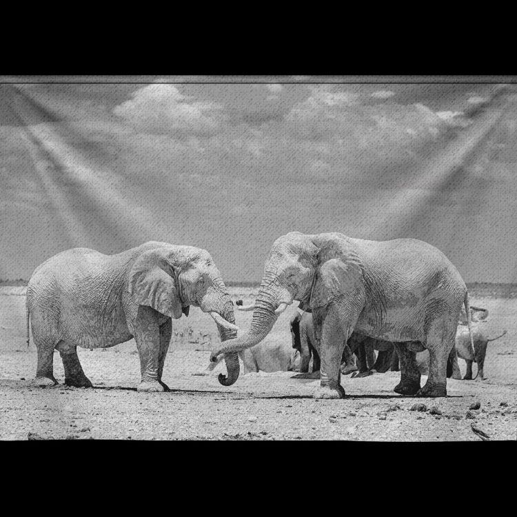 Wandkleed Spelende olifanten