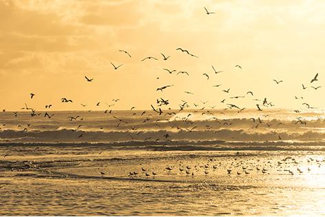 Big group of seagulls