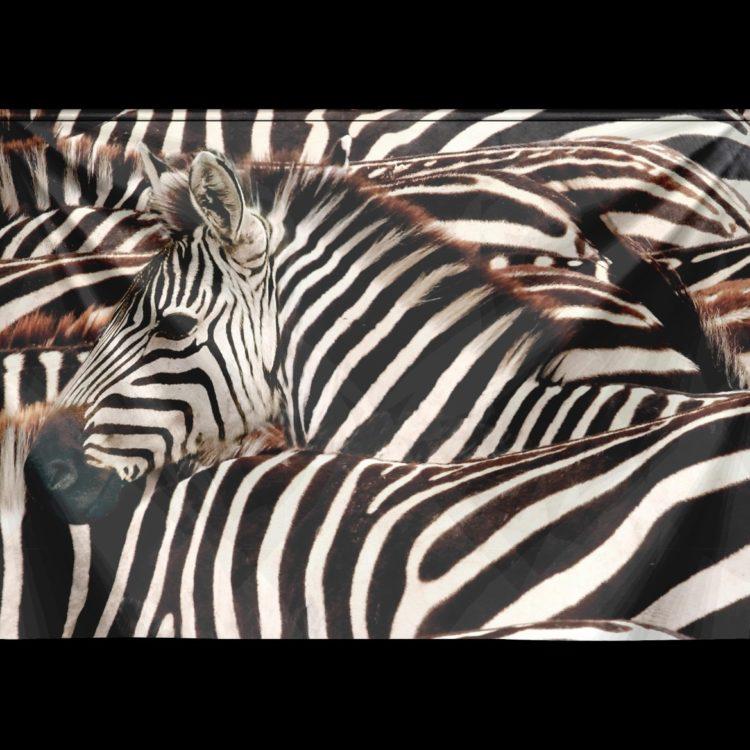Wandkleed Velvet Zebra