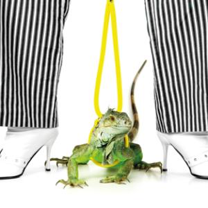 Green Iguna / Striped trousers