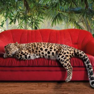 Leopard on a sofa
