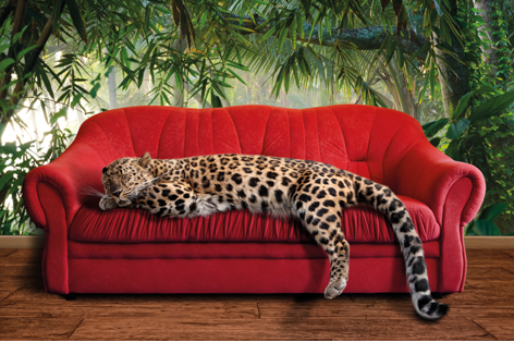 Leopard on a sofa