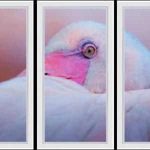 Drieluik Pink flamingo close up