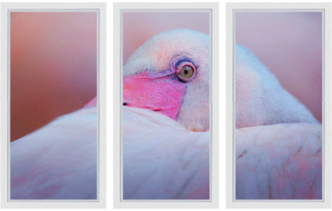 "Ingelijste poster ""Drieluik Pink flamingo close up"" van Mondiart"