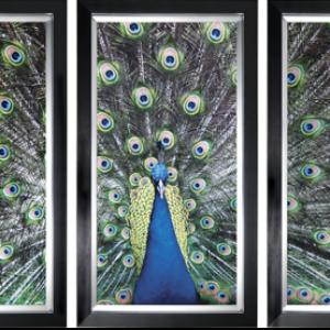 Drieluik blauwe pauw