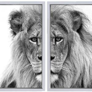 Leeuw Wit