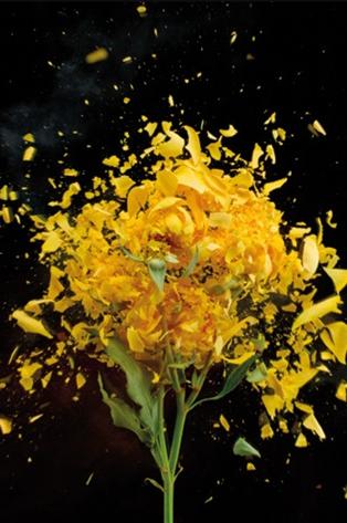 "Aluminium schilderij ""Exploding Yellow Roses"" van MondiArt"