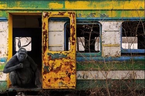 """Aluminium schilderij """"Urban Gorilla"""" van MondiArt"""
