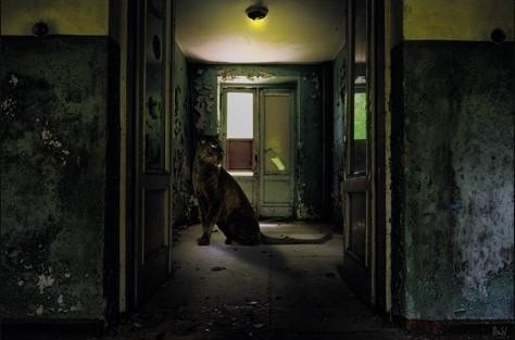 "Aluminium schilderij ""Urban Panther"" van MondiArt"