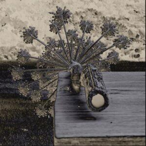 "Aluminium schilderij ""In a little while"" van MondiArt"