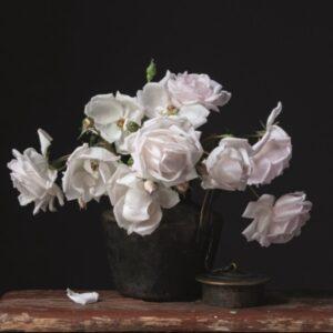 "Aluminium schilderij ""New Dawn Rose"" van MondiArt"