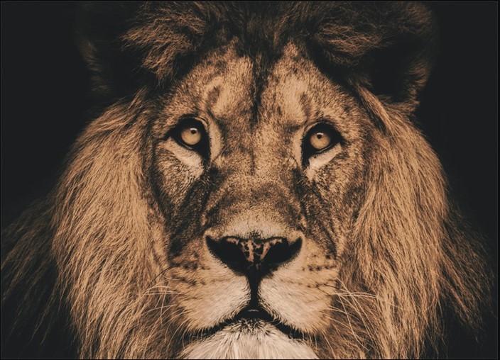 """Wandkleed """"Lion"""" van Mondiart"""