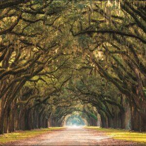 "Wandkleed ""Path lined with Oak Trees"" van Mondiart"