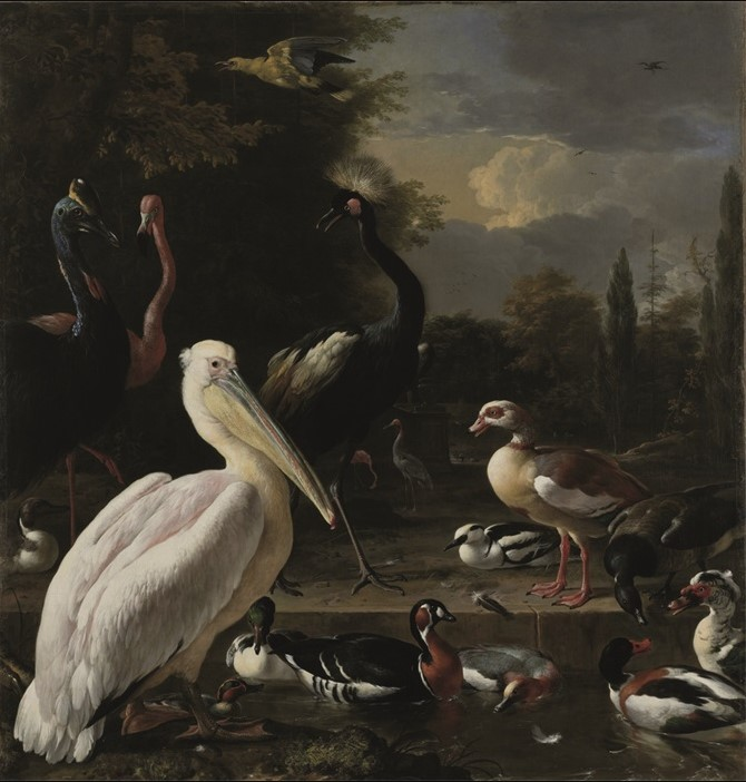 "Wandkleed ""Pelican and other birds"" van Mondiart"