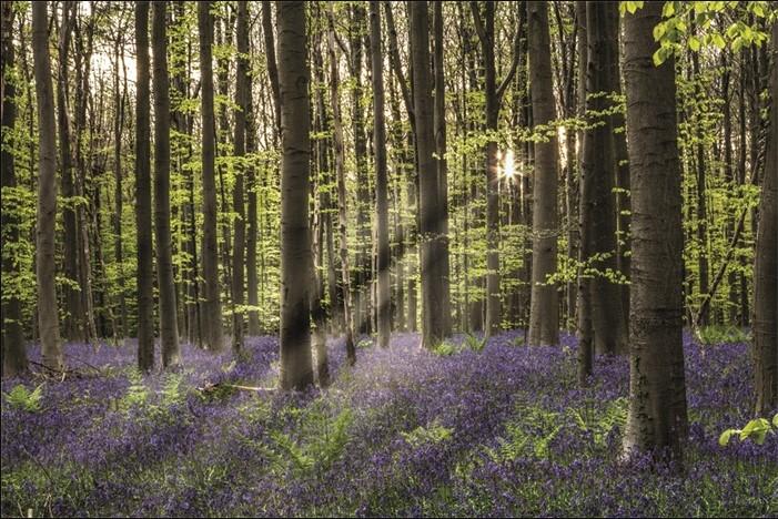 "Aluminium schilderij ""Fairytale Forest"" van MondiArt"
