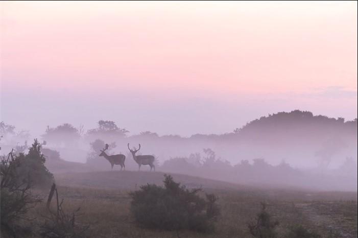 "Aluminium schilderij ""Morning walk"" van MondiArt"