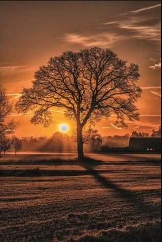 """Aluminium schilderij """"Sunset tree"""" van MondiArt"""