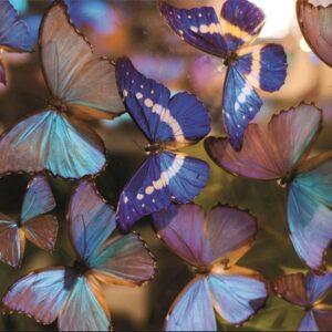 "Design karpet ""Butterflies"" van MondiArt"