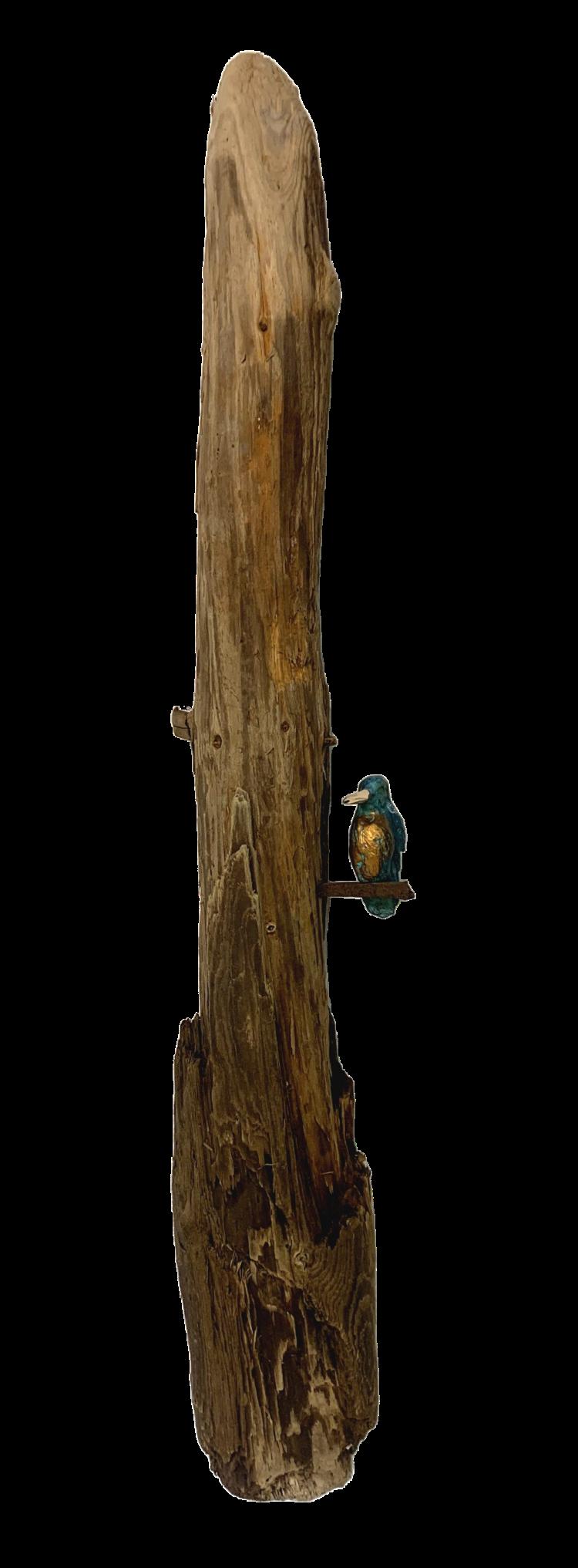 Bronzen ijsvogel (klein) op dikke tak
