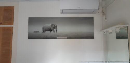 Rustgevende foto van een olifant en zebra, in het grijs
