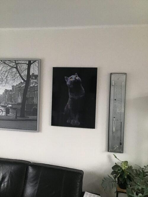 Schilderij met omhoog kijkende kat.